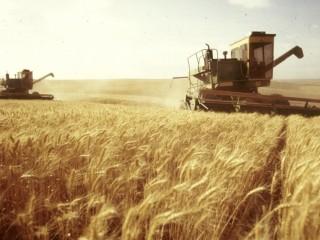Пшеница, ячмень, кукуруза зерно продаем франко-вагон FCA