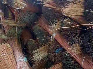 Ивовый прут (ивовая лоза) оптом и в розницу