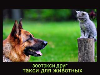 Зоотакси  в Москве, зоотакси