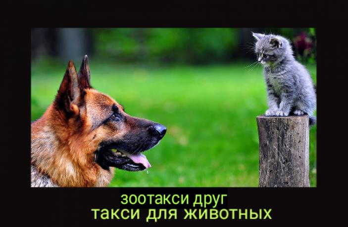 zootaksi-zootaksi-drug-big-0