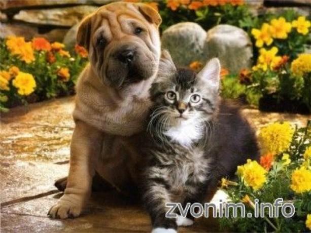 veterinar-k-vam-na-dom-big-0