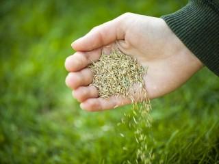 Посев газона. Укладка рулонного газона