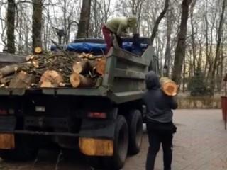 Вывоз спиленных деревьев с участка